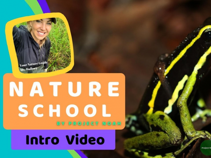cropped thumbnail for Nature School's intro video